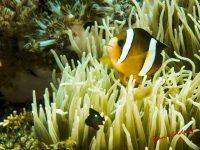 Philippines Marine Life