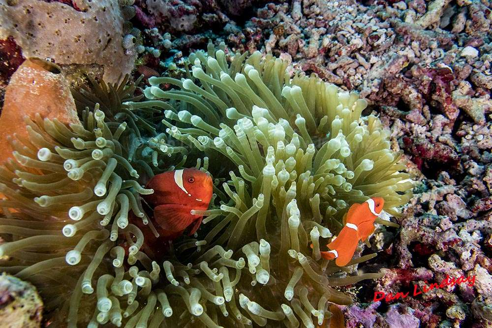 Wakatobi Reef Diving